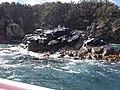 Pennicott Bruny Island cruise (33070529904).jpg