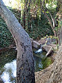 Permanente Creek weir.jpg
