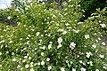 Persephone Nature Trail, Troodos, Cyprus - panoramio (2).jpg