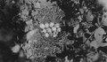 Photograph of Hungarian Partridge Nest - NARA - 2127729.tif