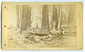 Photograph of Six Men Resting Near Fallen Trees - NARA - 7829556.jpg