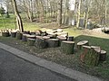 Pieces of tree trunks in the parc de l'Aulnaye.jpg