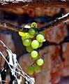 PikiWiki Israel 18625 Plants of Israel.jpg
