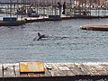 PikiWiki Israel 43715 Dolphin.jpg