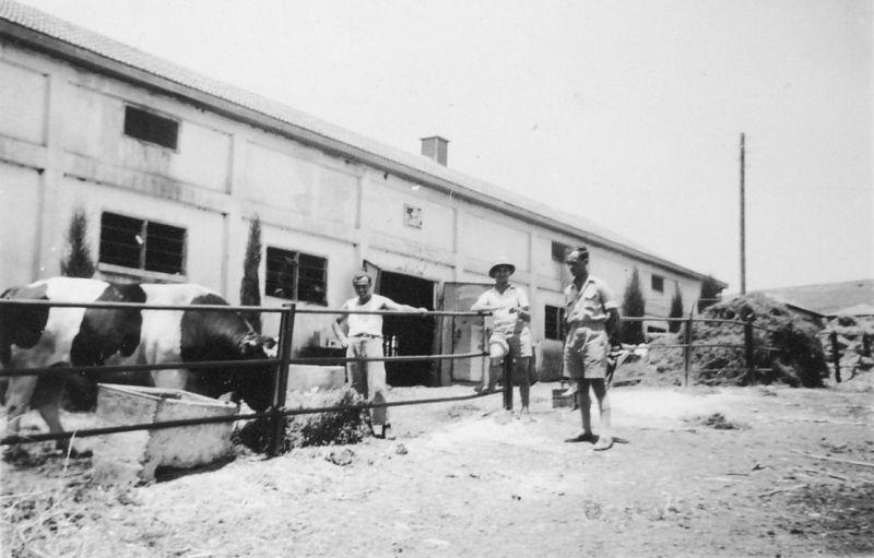 הרפת בתל יוסף בשנות השלושים