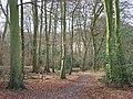 Pimlock's Wood, Bradenham - geograph.org.uk - 676604.jpg