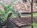 Pirenópolis - State of Goiás, Brazil - panoramio (57).jpg