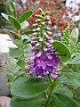 Plantas floridas (4297158025).jpg