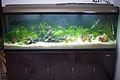 Planted Aquarium (5380992862).jpg