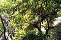 Plants at DC Hill, Chittagong (2).jpg