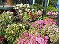 Plants of Tivoli Gardens 06.jpg