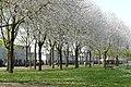 Plantsoen 't Blok Spring 2020 P1460840.jpg