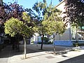 Plaza Penya Montanyesa (Zaragoza).jpg