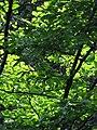 Pohorje (2803261051).jpg