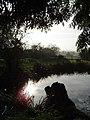 Pond, Debach, Suffolk - geograph.org.uk - 16703.jpg