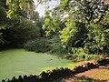 Pond, Leigh Woods (geograph 4186257).jpg