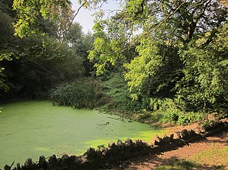 Leigh Court - A pond in Leigh Woods attached to the estate