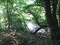 Pond at woodland edge - geograph.org.uk - 1373100.jpg
