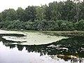 Pond behind Proletarsky Park (4) - panoramio.jpg