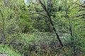 Pond near Meshkovo 04.jpg