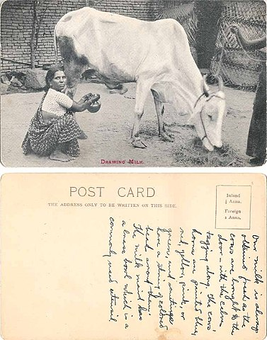 Postcard of Indian woman drawing milk from a desi-cow