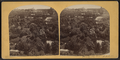 Prospect Park (bird's-eye view), from Robert N. Dennis collection of stereoscopic views.png