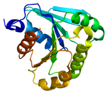 Protein ARL3 PDB 1fzq.png