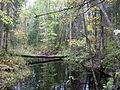 Puhatu looduskaitseala Liguski sihtkaitsevöönd.JPG
