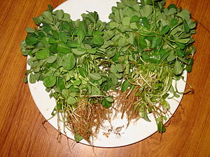 Fenugreek Leaves is known as Qasuri Methi in u...