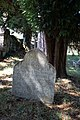 Queen Victoria's Yew, Sturminster Marshall.jpg