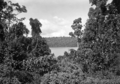 Queensland State Archives 1271 Tropical vegetation and a peep at Lake Barrine from the road Atherton Tableland c 1935.png
