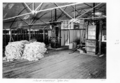 Queensland State Archives 5021 Woolshed Interior Afton Downs 1952.png