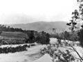 Queensland State Archives 867 Overlooking Mulgrave River and Bridge from Gillies Highway North Queensland October 1927.png