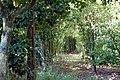 Quinta da Revolta - jardins.jpg