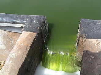 Waste stabilization pond - Effluent from a high rate algae pond and two maturation ponds in Attaouia, Morocco. Note the green color, caused by algae.