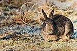 RSPB Sandy RSPB and Nature Reserves Wildlife (32445088606).jpg