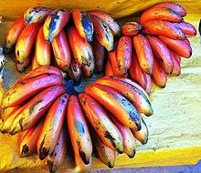 dans Fruits & Légumes du Pays