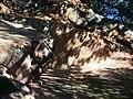 Red Rock Canyon State Park - USA, OK - panoramio.jpg