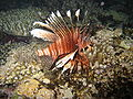 Red sea-reef 3408.jpg