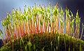 Redshank moss forest - Flickr - hedera.baltica.jpg