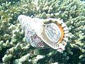 Reef0666 - Flickr - NOAA Photo Library.jpg