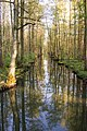 Reflection of trees on a canal in the biosphere reserve Spreewald, Brandenburg.jpg