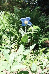 Rhododendronpark Bremen 20090513 264