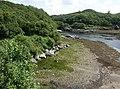 River Morar - geograph.org.uk - 23893.jpg