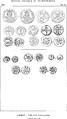 Rivista italiana di numismatica 1890 p 592.png
