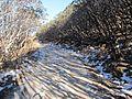 Road of Ice.jpg
