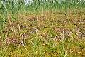 Robenhauser Riet 2010-07-01 14-26-20.JPG