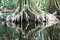 Roots reflections (15275469243).jpg