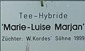 Rose - Marie-Luise Marjan (Schild).jpg