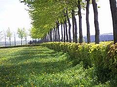 Hedge Wikipedia